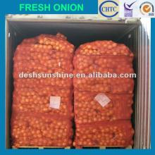 The best  market   onions   prices