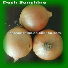 2012 new crop onions 25 kg bags