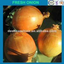 2012 chinese new crop big onion(9--11cm)
