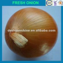 2012 New Crop  onion  fresh  big   onion ,good quality,cheap price