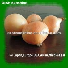 2012 new onion low market onions prices
