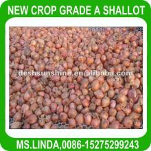 2012 New Crop Grade A Chinese fresh  red  shallot  onion s