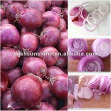 supplying Chinese types red onions