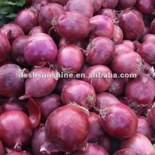 supplying Chinese red shallot onion