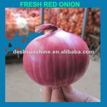 Grade A Chinese red big onion (9--11MM)