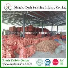 market yellow onion/ golden onion price