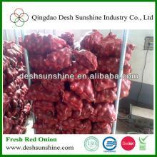 fresh red onion market price