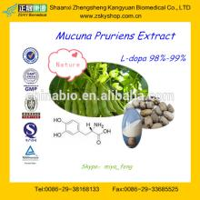 Top Quality Mucuna Pruriens Extract L-dopa Powder from GMP Factory