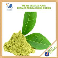 GMP Manufacturer Supply High Quality Slim Green Tea