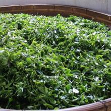 Chinese High Quality  green   tea   slim