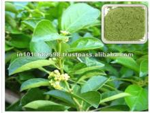 Gymnema   sylvestre  Extract 25%