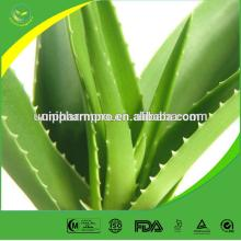 Factory supply best selling aloe vera extract for  cosmetics