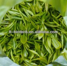 ISO&GMP Factory Supply Pure Green Tea Extract Powder