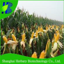 High yield yellow sweet waxy corn seed on sale