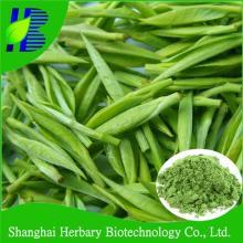 GMP factory supply white tea powder