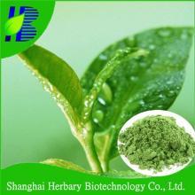 White   Tea  Extract Powder /  White   Tea  Powder /  White   Tea  P.E.