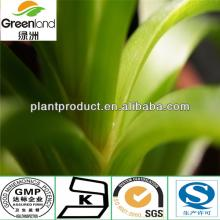 natural aloe vera extract 20% 95%10:1