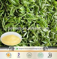 natural EGCG powdder Free Sample Green Tea Extract Powder