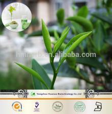 2014 new products on the market organic matcha green tea powder