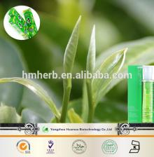 cheap price for the natural plant extract matcha green tea powder