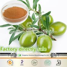 2014 New Product  Olive   leaf   extract   Hydroxytyrosol   Olive   Leaf   Extract  Oleuropein