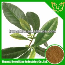 100%pure natural green tea extract/pure natural green tea extract powder easy absorb factory price g