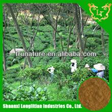 Pure   green   tea  extract/ pure   green   tea  extract powder/powder  green   tea  with good quality and price fr