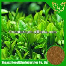 Terrific Quality ! Wholesale price high pure powder green tea extract 95%/green tea powder factory p