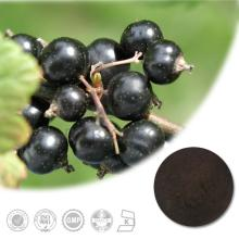 100% Natural Pure High Quality Blackcurrant Extract with 5%, 10%, 15%, 20%, 25% Anthocyanins UV/ HPL
