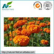 marigold extract powder lutein professional manufacturer