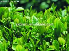 100% Pure &Natural Green Tea Extract Suppliers
