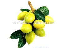 10-98% Oleuropein/1-98%  Hydroxytyrosol  / olive   Leaf   Extract