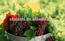 Quality  Grape   Seed ,Plant,Food  Supplement  Raw Material