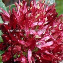 Rhodiola Rosea Extract--Salidroside 1%,2%,3%