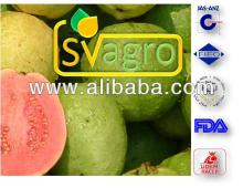 Spray Dried  Guava   Powder  from India