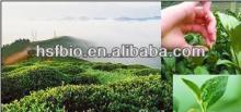 Organic Pu-erh tea extract/puer tea extract/Tea Polyphenols Powder