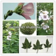 100% Natural Marshmallow Leaf Extract Powder (Althaea Officinalis ) HPLC/UV 4:1