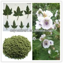 Natural Plant Marshmallow Extract Powder (Althaea Officinalis )  HPLC / UV  4:1