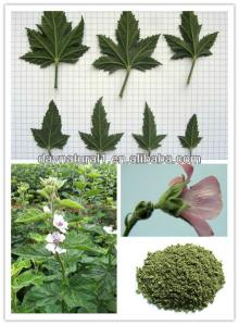 Wholesale Marshmallow Leaf Extract Uses (Althaea Officinalis ) HPLC/UV 4:1