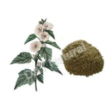 Plant Base Marshmallow Leaves Cutted in Stock