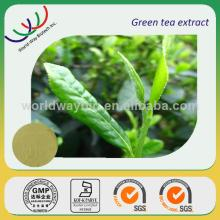 HACCP certified companies supply anti-oxidant high quality green tea powdered extract