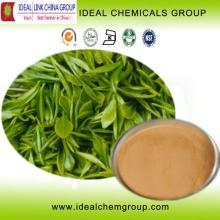 100% Pure  Tea  Polyphenol,  Organic   White   Tea   Extract  Capsules,EGCG with Best Price