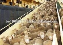 Live  Cattles,  Live  Goats, and other  live   stock s