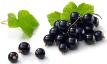 black currant juice concentrate