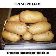 spring potato