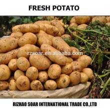 potato,chinese fresh potatoes