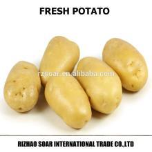 fresh dutch potatoes