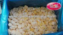 Dubai frozen food importer