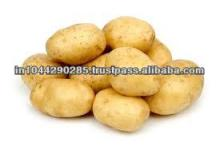 Sweet Indian Potato for sale