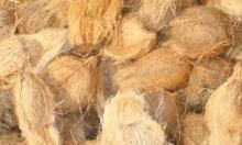 fresh coconuts in kerala
